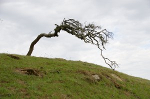 Windy Tree